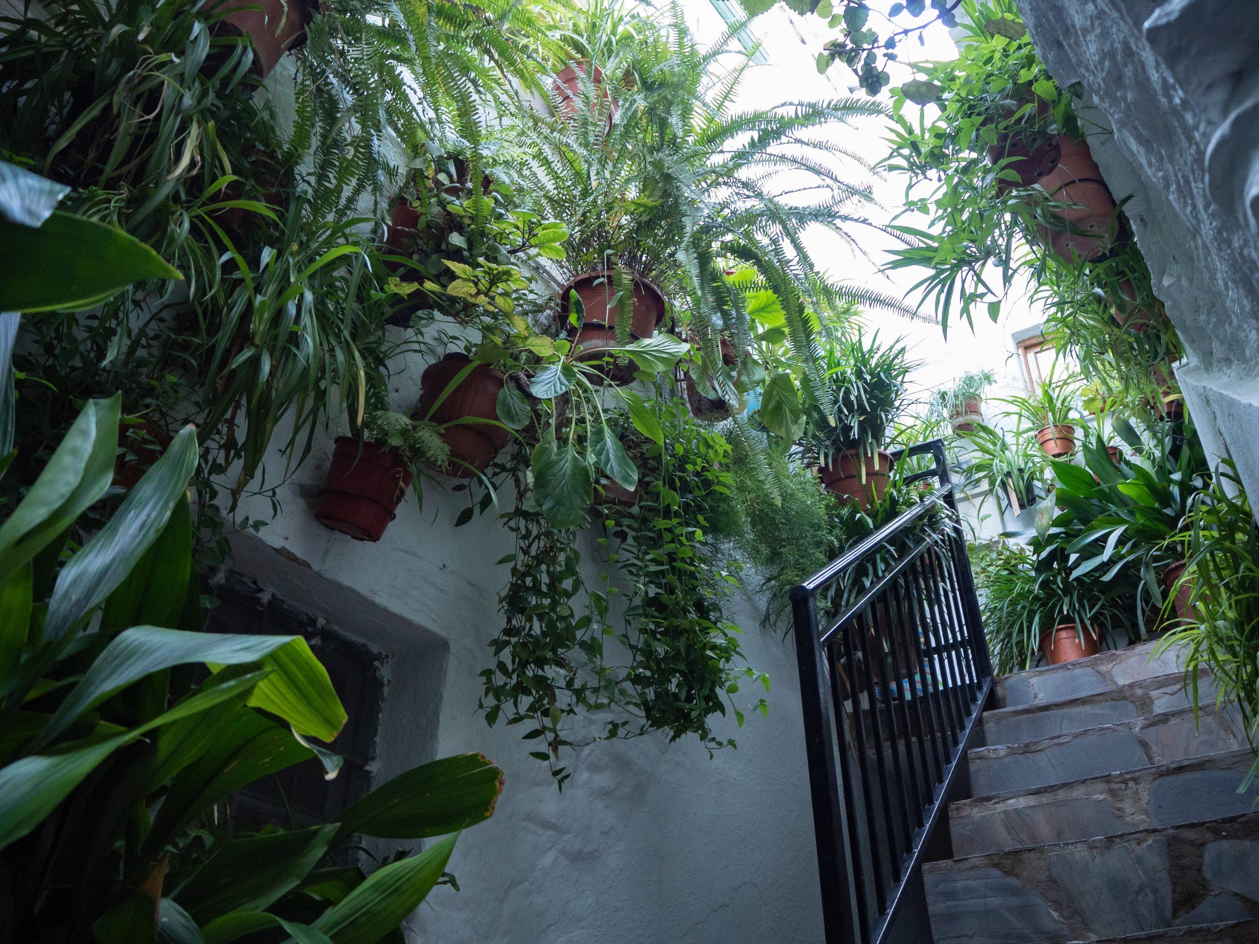 Casa con plantas en Hotel Rural Fuente La Teja Güéjar Sierra